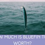 How Much is Bluefin Tuna worth